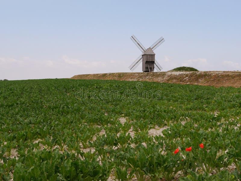 Мельница и маки Valmy в Argonne стоковое фото rf