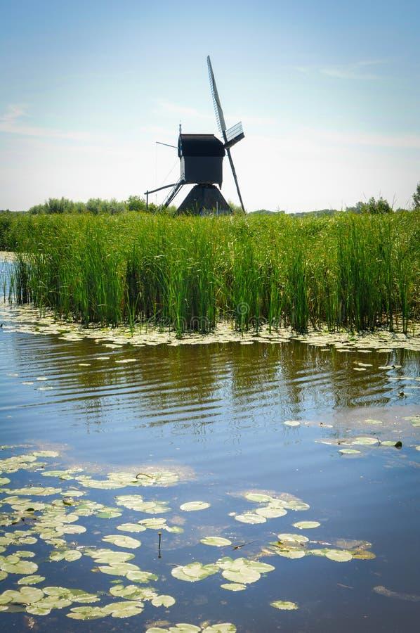 Мельницы рекой в Kinderdijk стоковое фото rf