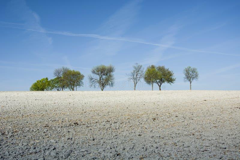 Мел поля, деревья и голубое небо стоковое фото rf