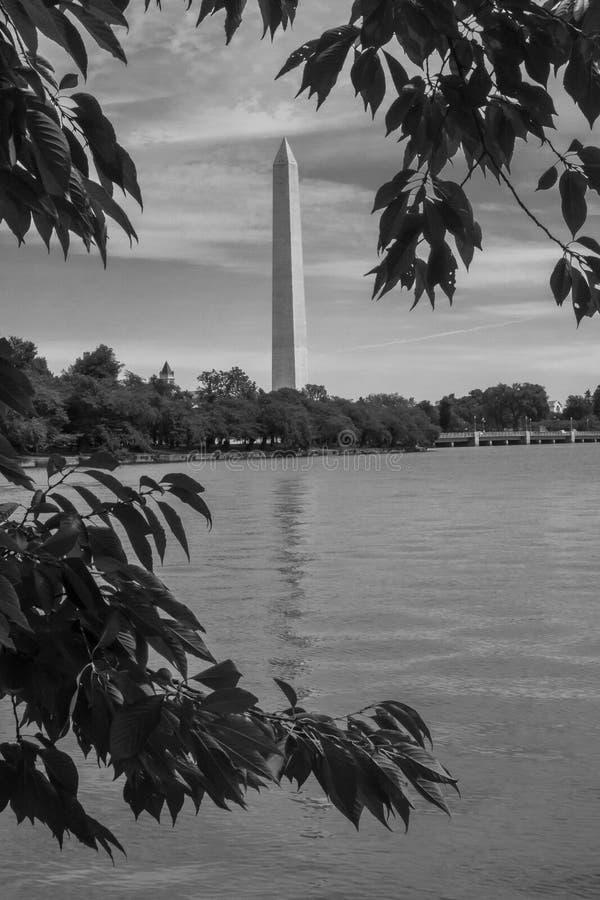 Мемориал Вашингтона в черно-белом стоковое фото rf