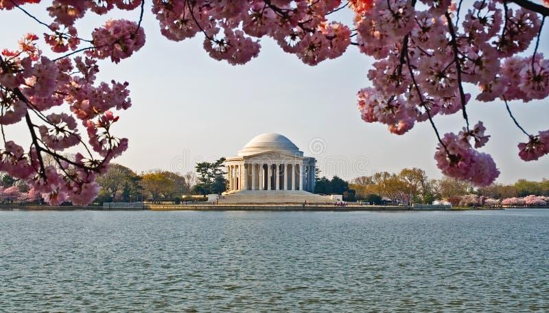 мемориал jefferson вишни цветений стоковые изображения rf