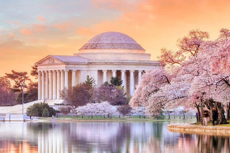 Мемориал Jefferson во время фестиваля вишневого цвета стоковое фото rf