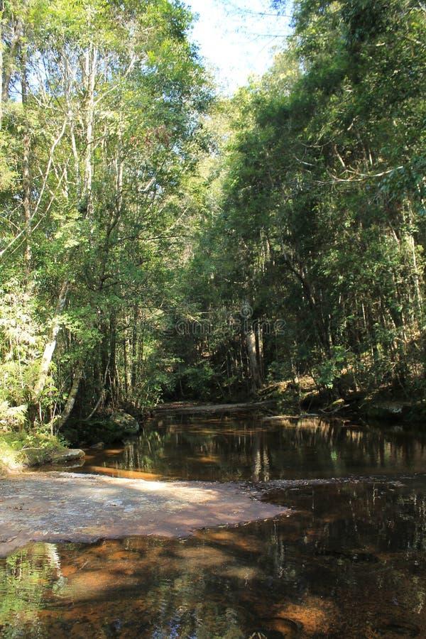 Меньшая вода в лесе стоковая фотография rf
