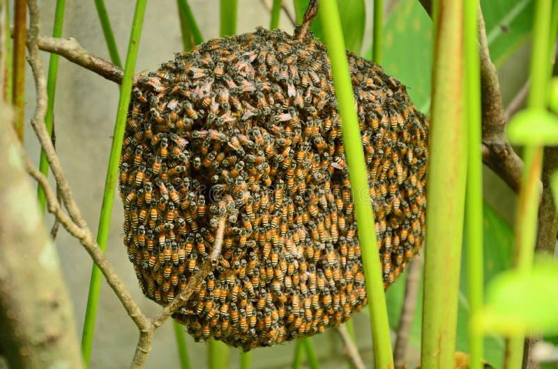 Меньшая одичалая крапивница с пчелами стоковые фотографии rf