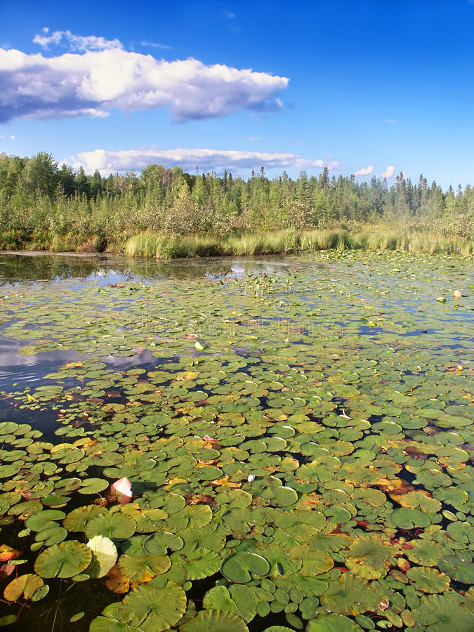 Меньшее озеро Northwoods Висконсин Bearskin стоковая фотография