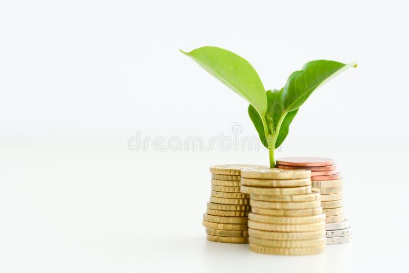 Меньший завод пуская ростии от кучи монеток стоковые изображения