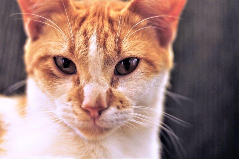 Меньший кот огня стоковые изображения rf