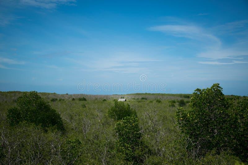 Меньший дом в мангровах стоковые фотографии rf