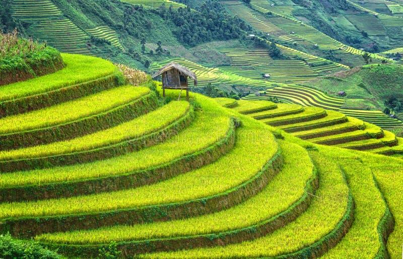 Меньший дом на террасных полях wanderous стоковая фотография