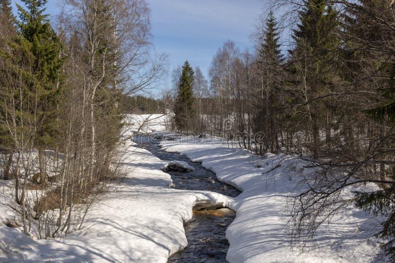 Меньший поток в лесе где таяние начинало стоковое изображение