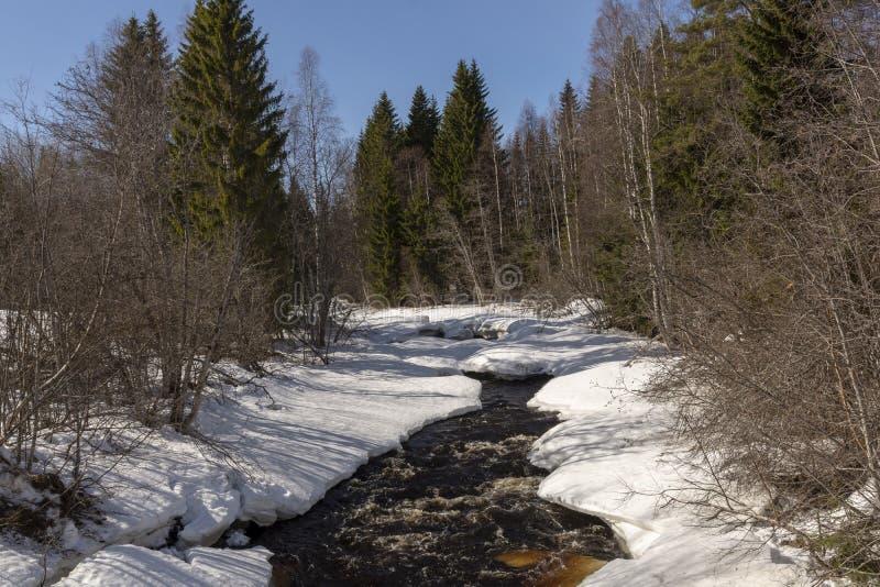 Меньший поток в лесе где таяние начинало стоковое изображение rf