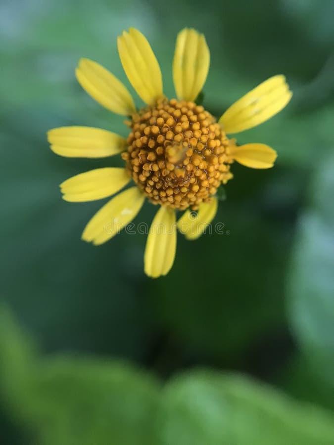 Меньший цветок в макросе стоковые изображения