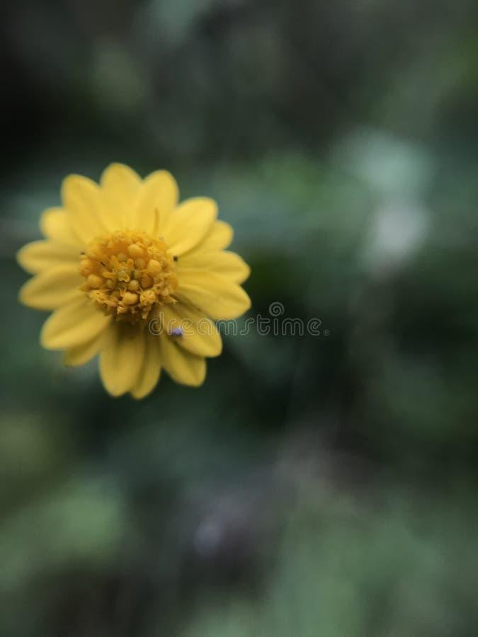 Меньший цветок в макросе стоковые фотографии rf