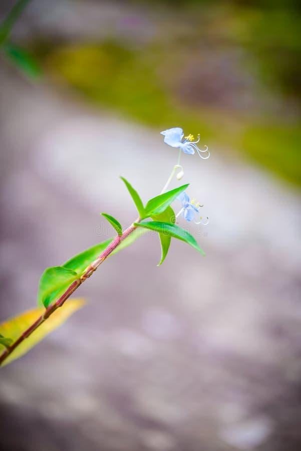 Меньший цветок в национальном парке Phu Hin Rong Kla, Phitsanulok Pro стоковая фотография