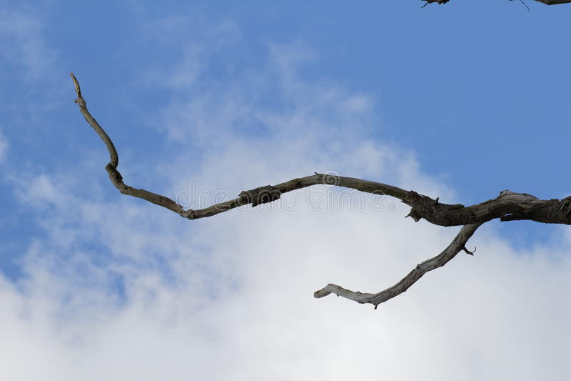Мертвая ветвь на небе стоковые изображения rf