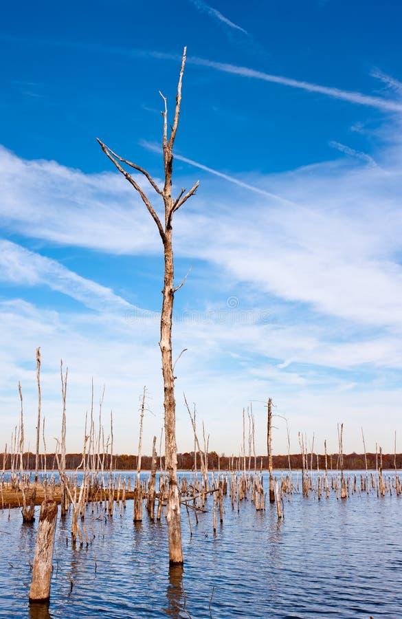 мертвая вода валов стоковые фотографии rf