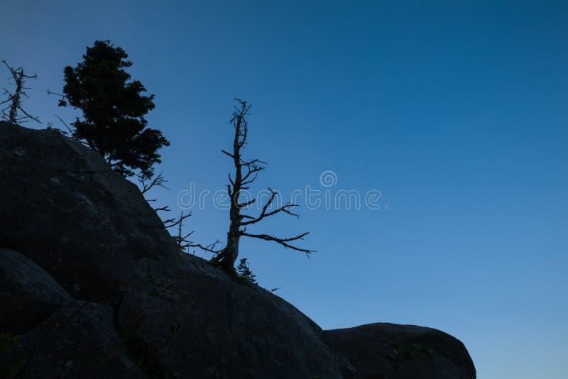 Мертвая деревья Силуэт, Клингманс Купол, Смоки стоковые изображения rf