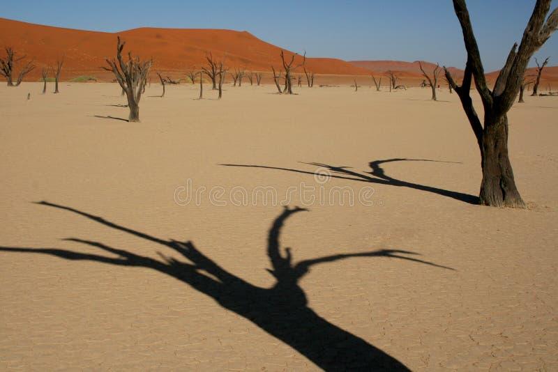 мертвая долина стоковые фотографии rf