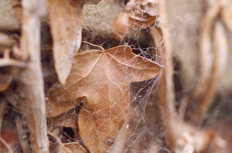 Мертвая лоза стоковое изображение rf