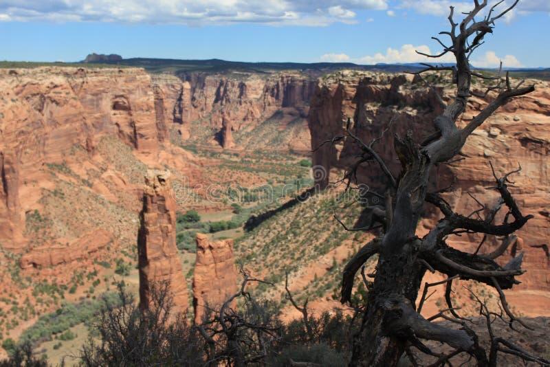 Мертвое дерево на американской предпосылке каньона стоковая фотография
