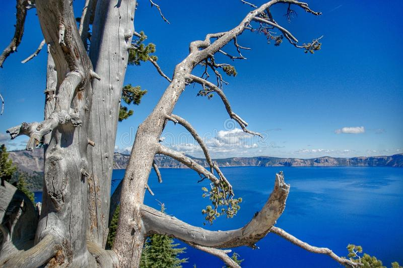 Мертвое дерево на кратере стоковые фотографии rf