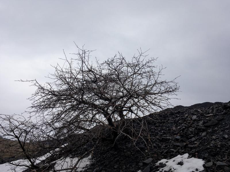 Мертвое дерево на черном холме стоковая фотография rf