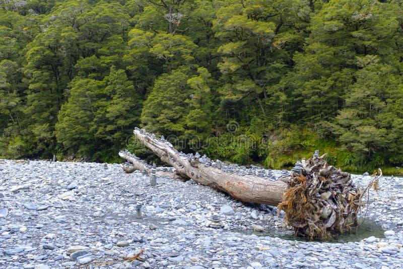Мертвое дерево озером стоковое фото