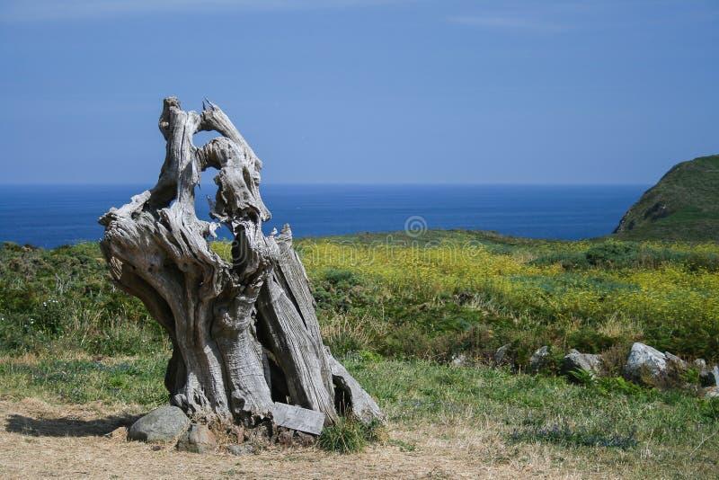 Мертвое дерево около моря стоковая фотография