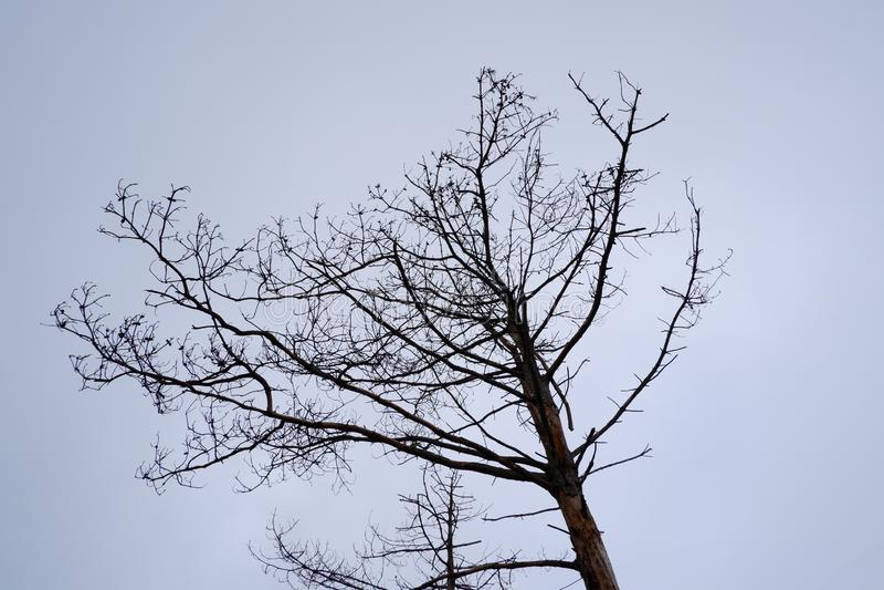 Мертвое дерево под чистым небом стоковые изображения