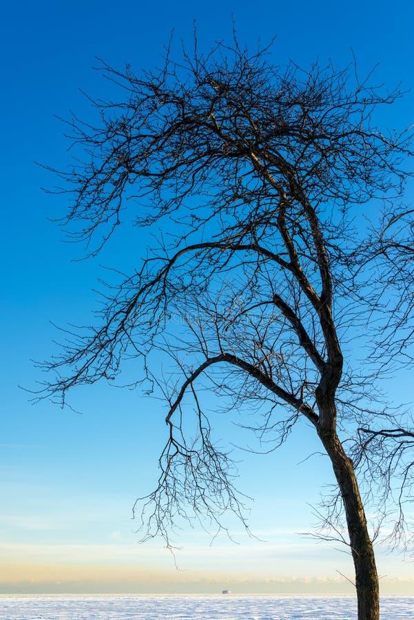 Мертвое дерево и замороженное озеро стоковые фото