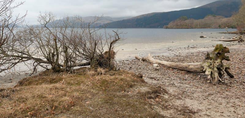 Мертвое дерево на береге стоковая фотография