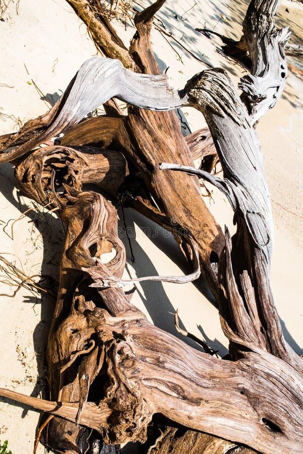 Мертвое дерево на пляже стоковые фото