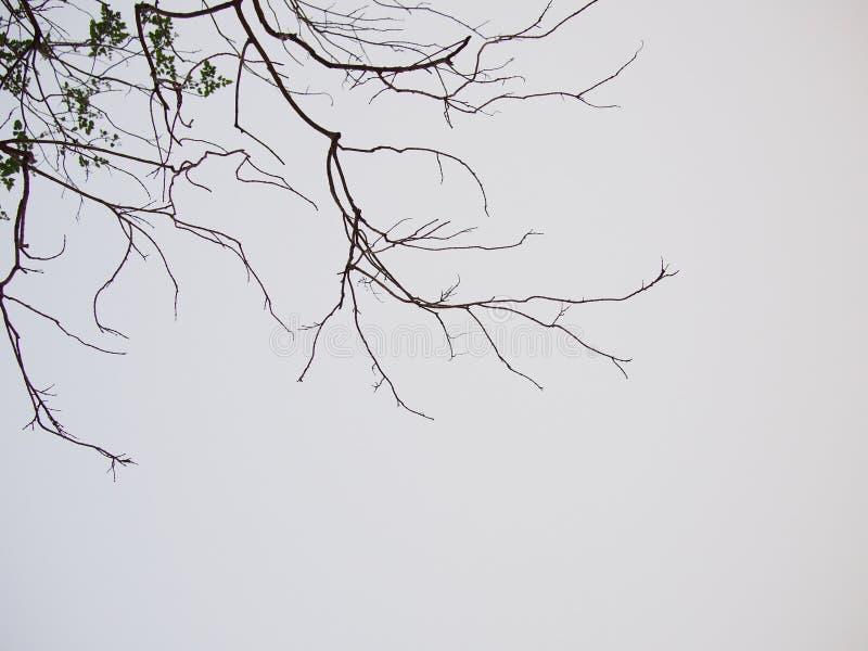Мертвое дерево на серой предпосылке стоковые изображения rf