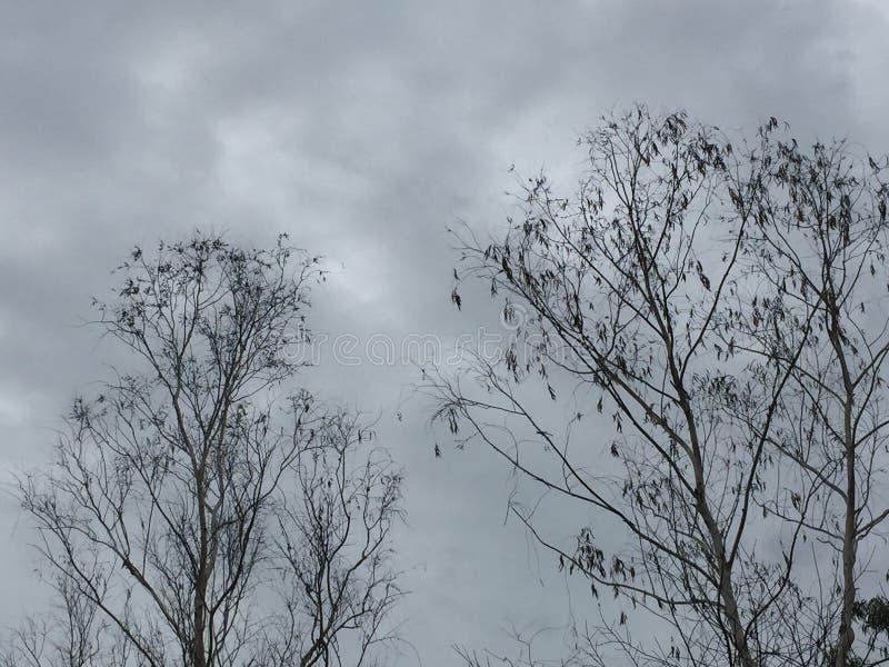 Мертвое дерево стоковое изображение rf
