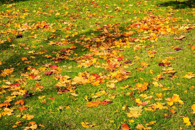 Мертвое падение осени выходит сезон кладя земной апельсин Брайна травы стоковые фотографии rf