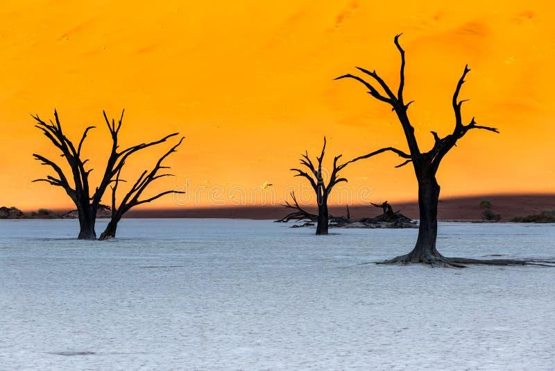 Мертвое Vlei, пустыня Namib, Sossusvlei на заходе солнца стоковое изображение