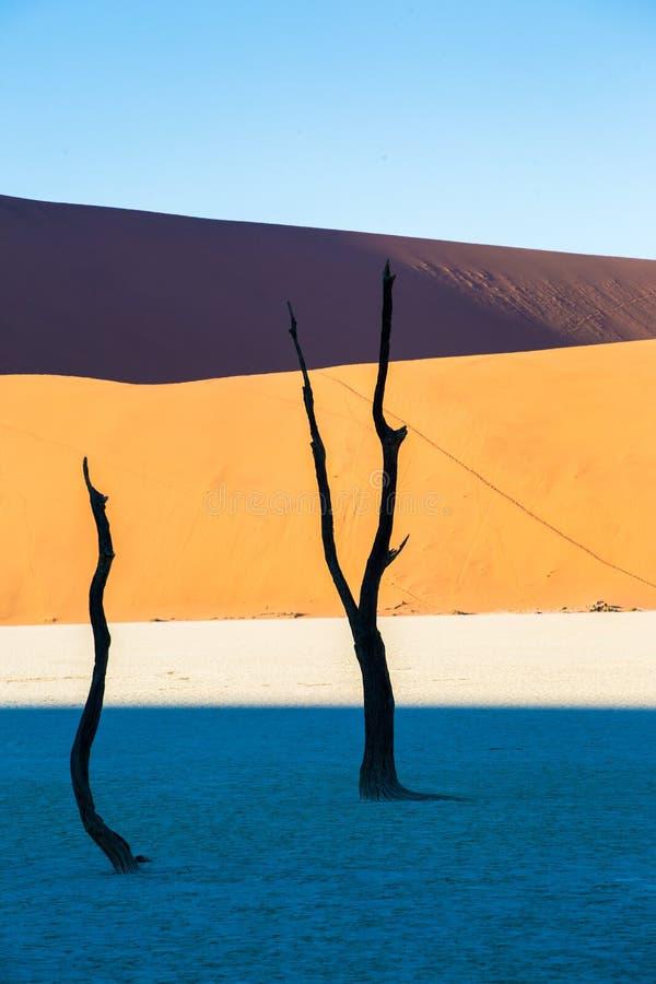 Мертвое Vlei, пустыня Namib, Sossusvlei на заходе солнца стоковые изображения rf