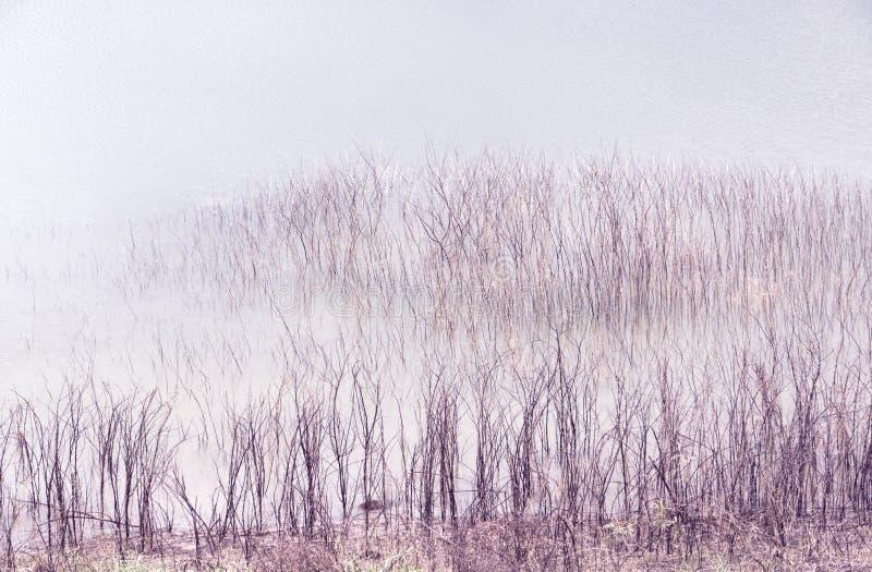 мертвые валы озера стоковые фото