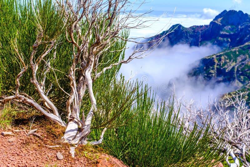 Мертвые деревья высокие в горах стоковые изображения