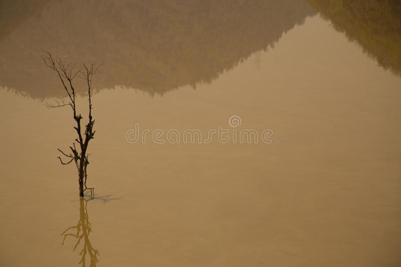 Мертвые деревья в воде стоковая фотография rf