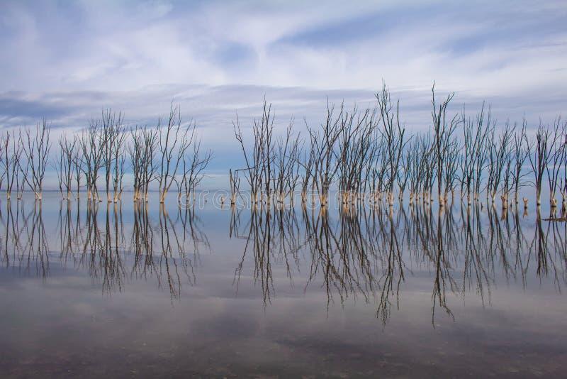 Мертвые деревья в озере Город Epecuen погрузил в воду стоковое изображение rf