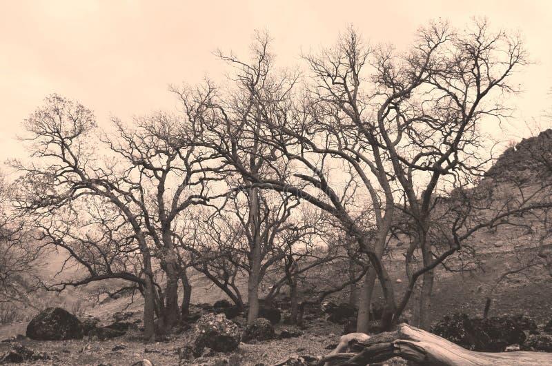 Мертвые деревья стоковая фотография