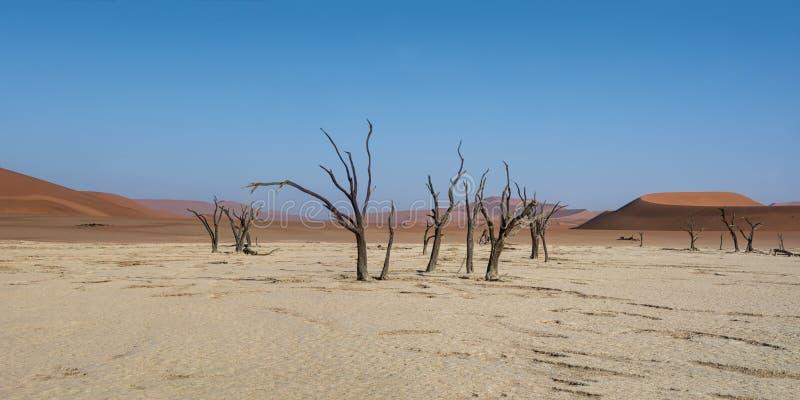 Мертвые деревья Vlei стоковые фотографии rf