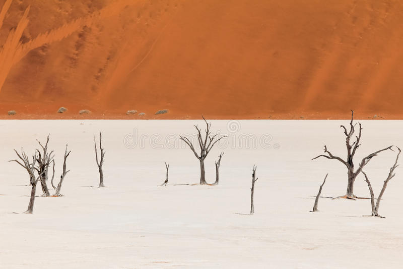 Мертвые деревья и дюны в соли готовят пустыню namib стоковое изображение