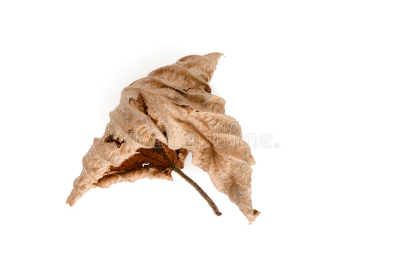 мертвые листья стоковая фотография rf