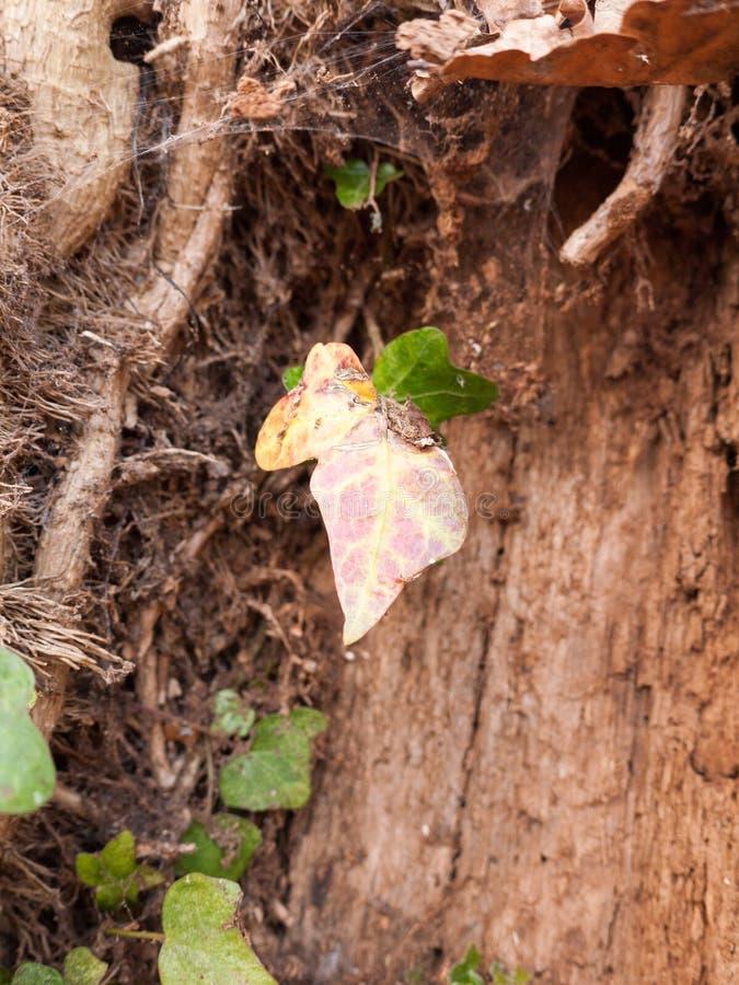 Мертвые лист качая от дерева перед хоботом стоковое фото rf