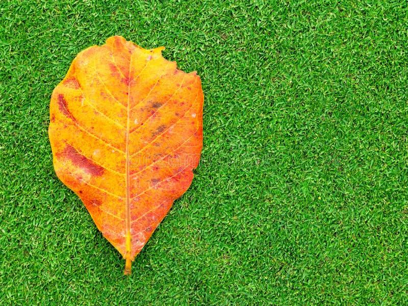 Мертвые лист на зеленой траве стоковые изображения