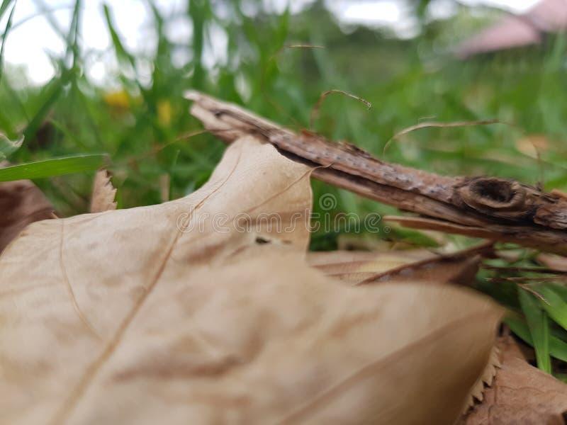 Мертвые листья на траве стоковая фотография