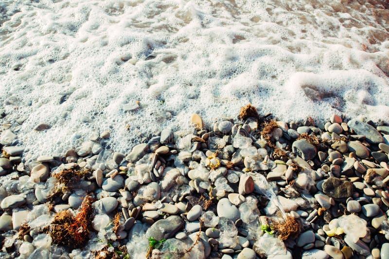 Мертвые медузы, сухие красные водоросли и отброс на пляже моря камешка стоковое фото