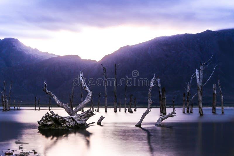 Мертвые пни дерева стоковые изображения rf